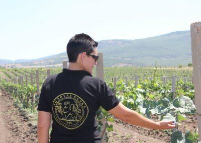 Виноградники Золотой Балки