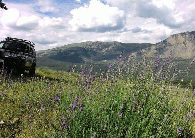 Джип туры по Крыму на лавандовые поля