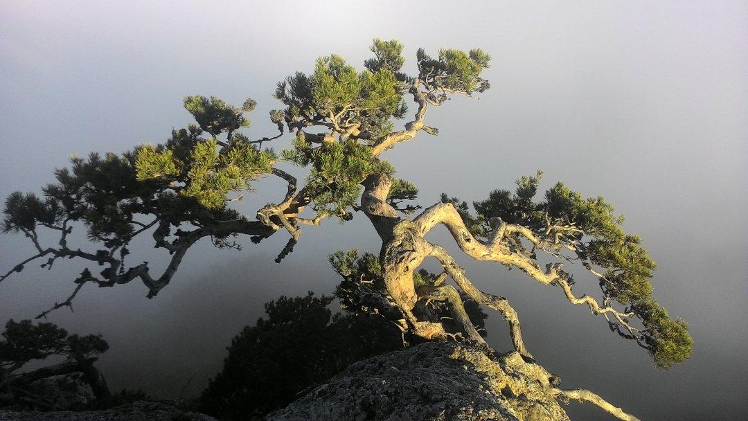 Бонсай в облаках демерджи
