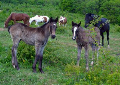 фото конные прогулки в Алуште