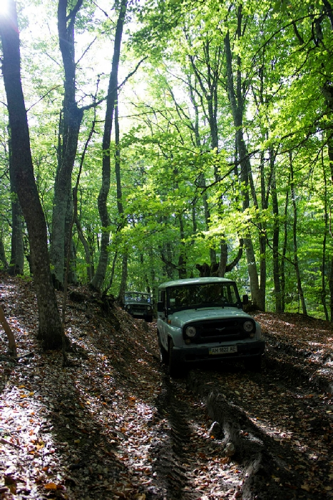 Буковый лес на маршруте Южная Демерджи