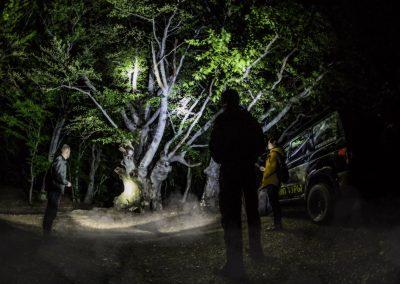 Буковый лес ночью