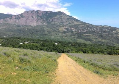 Лавандовые поля - Крым - Алушта