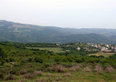 лавандовые поля