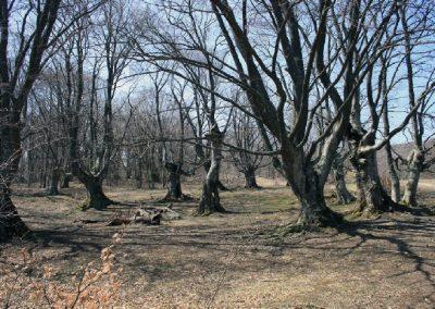 сказочный лес осенью