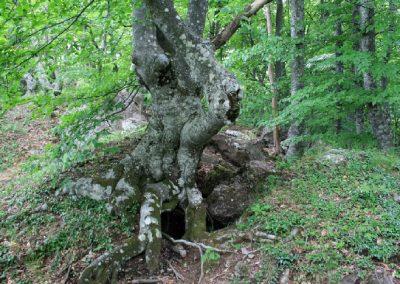загадочные деревья