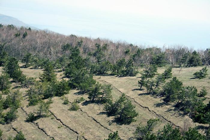 Демерджи горный лес