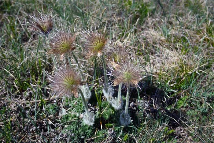 флора Демерджи
