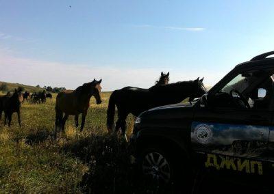 любопытные лошадки