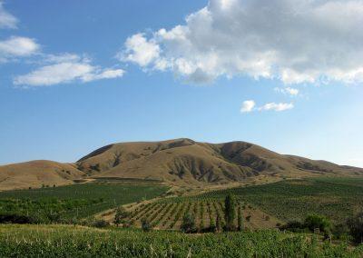 Виноградники солнечная Долина