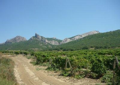 Виноградники солнечной долины