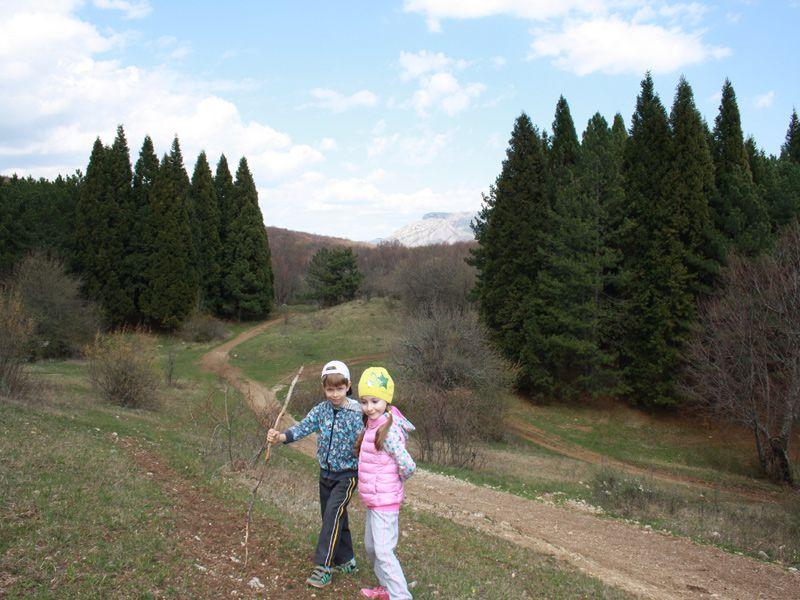 фото Роща секвойи в Крыму