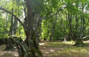 Крымский прованс на склонах Чатыр-дага